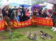 2013新春游园活动